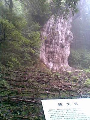 Jyoumonnsugikannbann20090